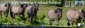 Koniki Polskie, Jazdy Rekreacyjne, Wyjazdy w teren, Rajdy całodniowe